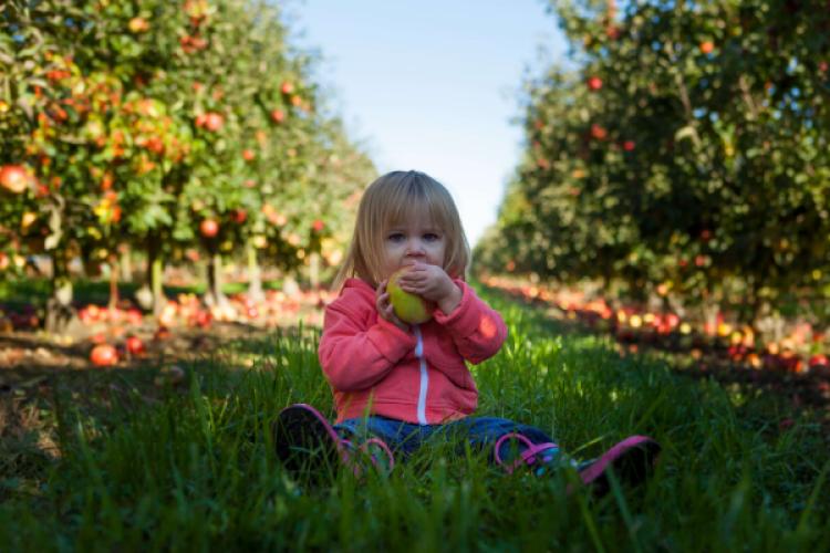 7 conseils pour apprendre aux enfants à aimer les saveurs simples et pures
