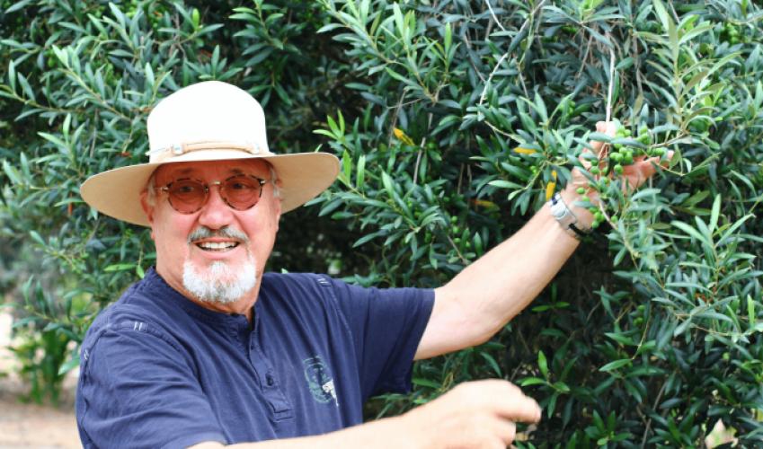 Voulez-vous savoir où on cultive les olives crues pour Lifefood ?