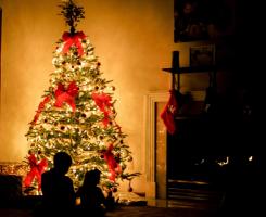 Un sapin de Noël vivant – L'éco-responsabilité au moment de Noël