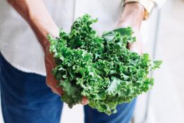 Le chou kale - le légume doux d'hiver